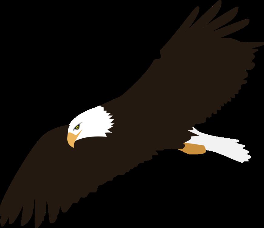 Bald Eagle Harpy Eagle Download free commercial clipart - Bald Eagle ...