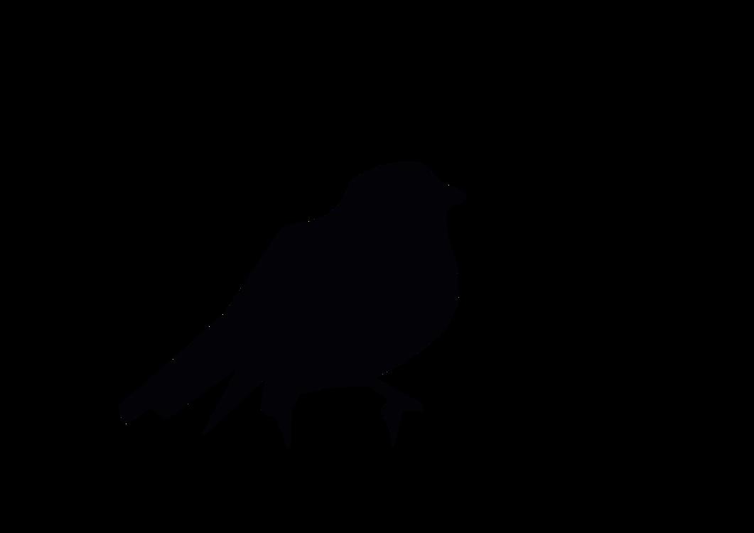 Crow Like Bird,Rook,Silhouette