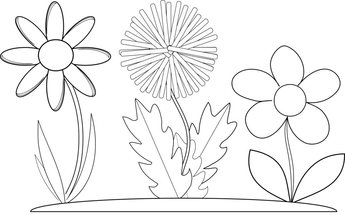 Flower black and white coloring. Symmetry monochrome photography petal