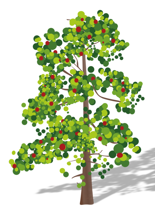 Evergreen,Plant,Houseplant