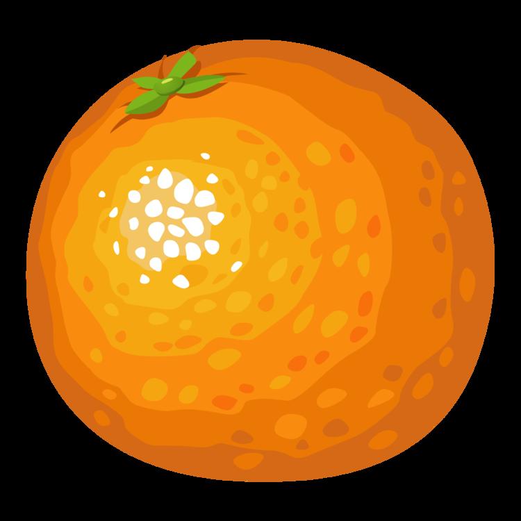 Food,Winter Squash,Fruit