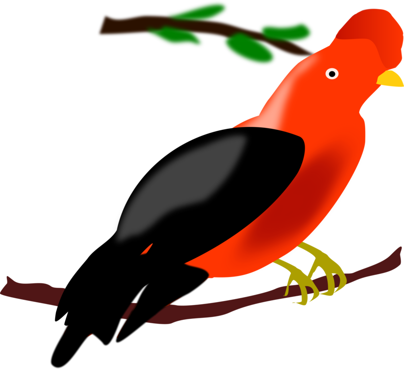 Wing,Bird,Artwork