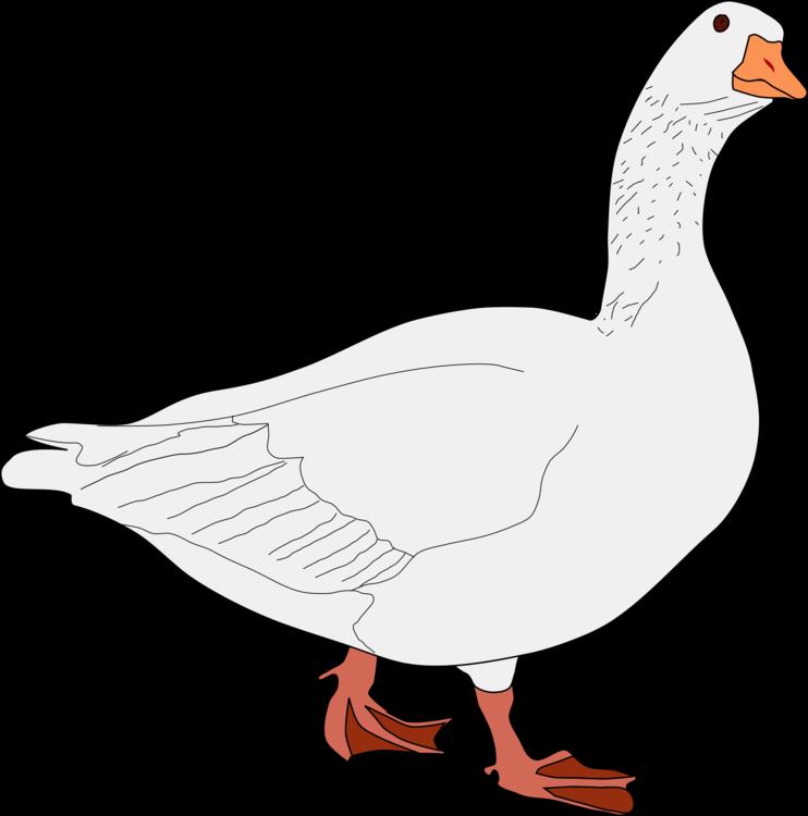 Poultry,Line Art,Galliformes