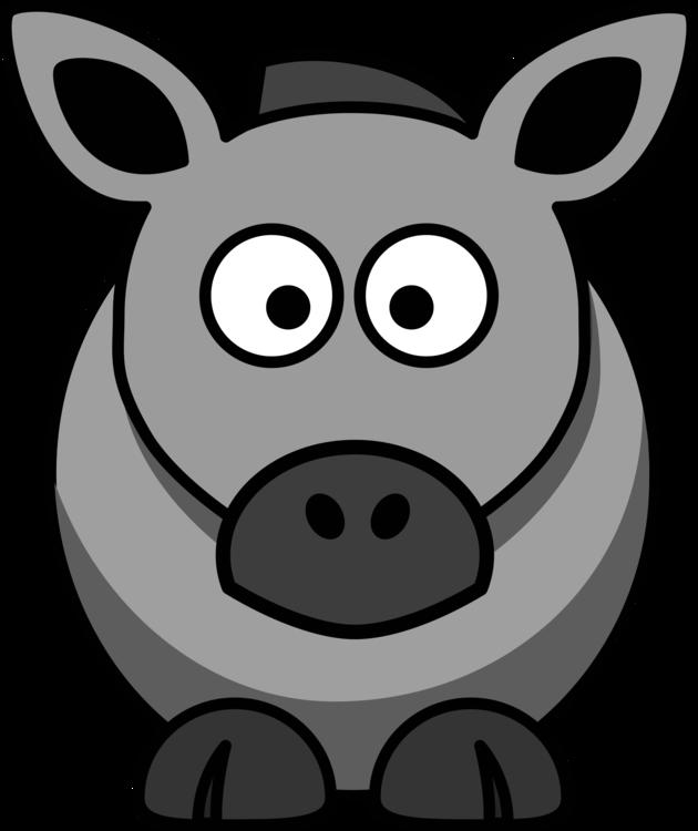 Head,Horse Like Mammal,Wildlife