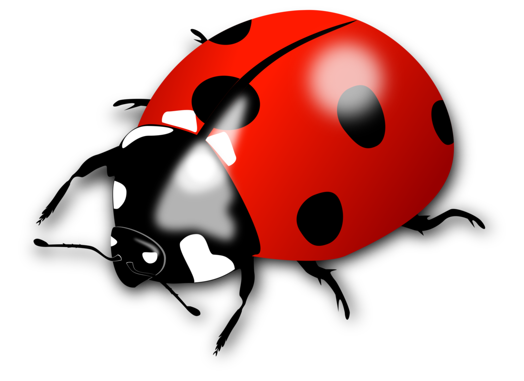 Arthropod,Bicycle Helmet,Ladybird