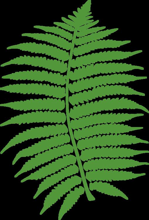 Plant,Leaf,Vascular Plant