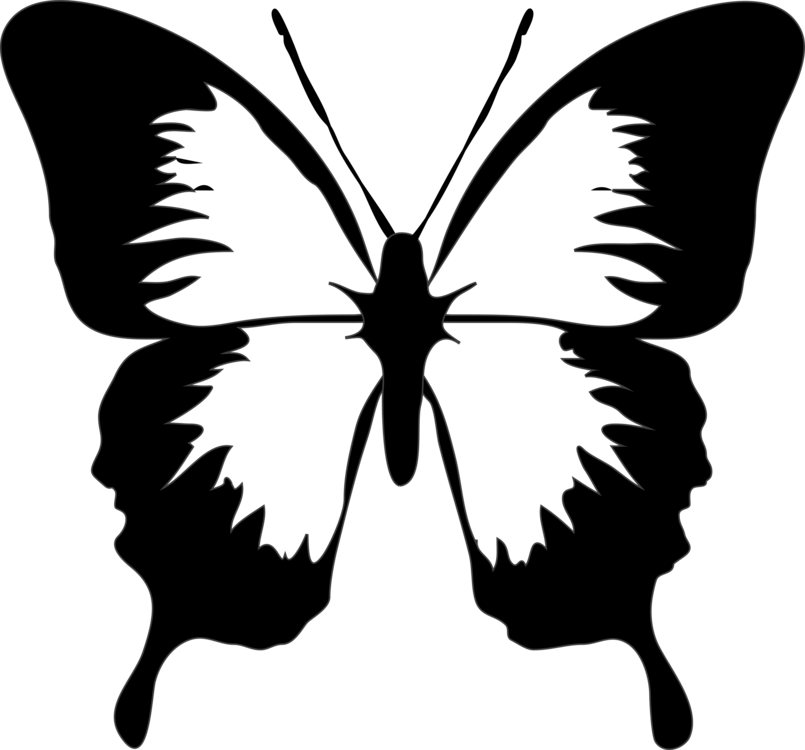 Symmetry,Monochrome Photography,Pollinator
