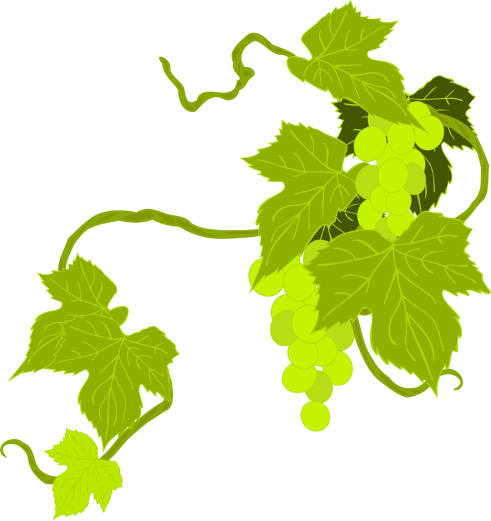 Plant,Leaf Vegetable,Grape