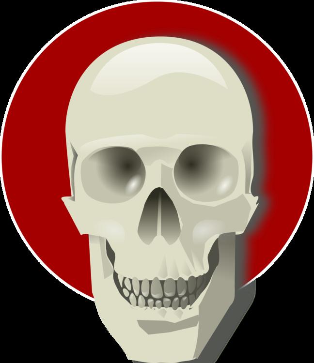 Jaw,Skull,Bone