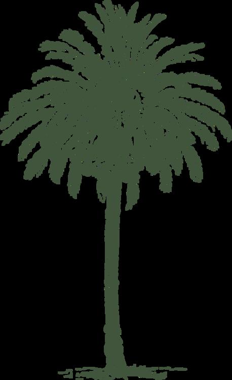 Evergreen,Plant,Arecales