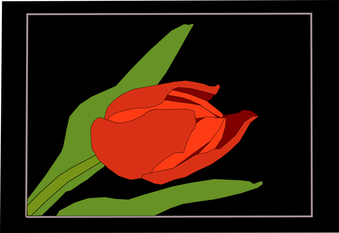 Computer Wallpaper,Plant,Flower