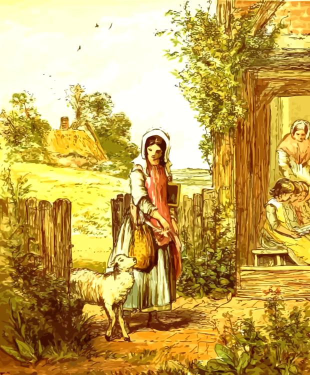 Grass Family,Flower,Art
