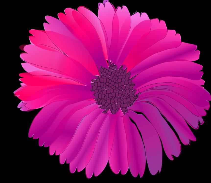 Pink,Chrysanths,Flower