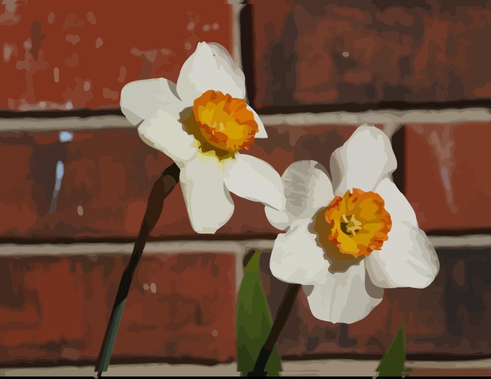 Plant,Flora,Spring
