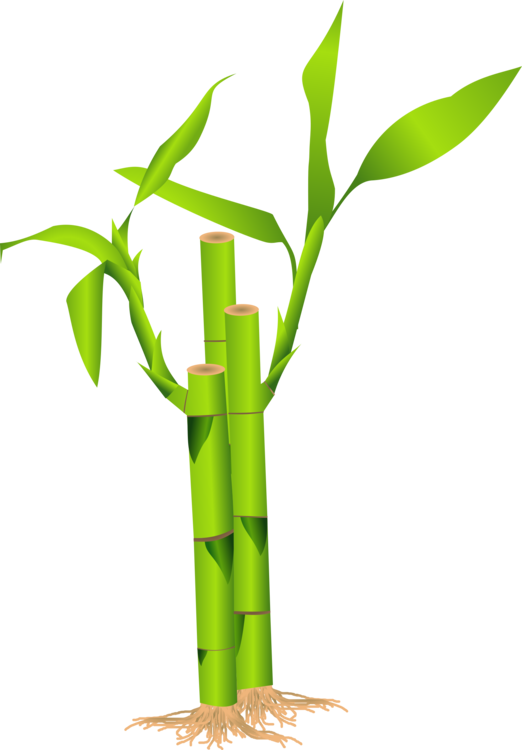 Plant Stem,Bamboo,Flowerpot