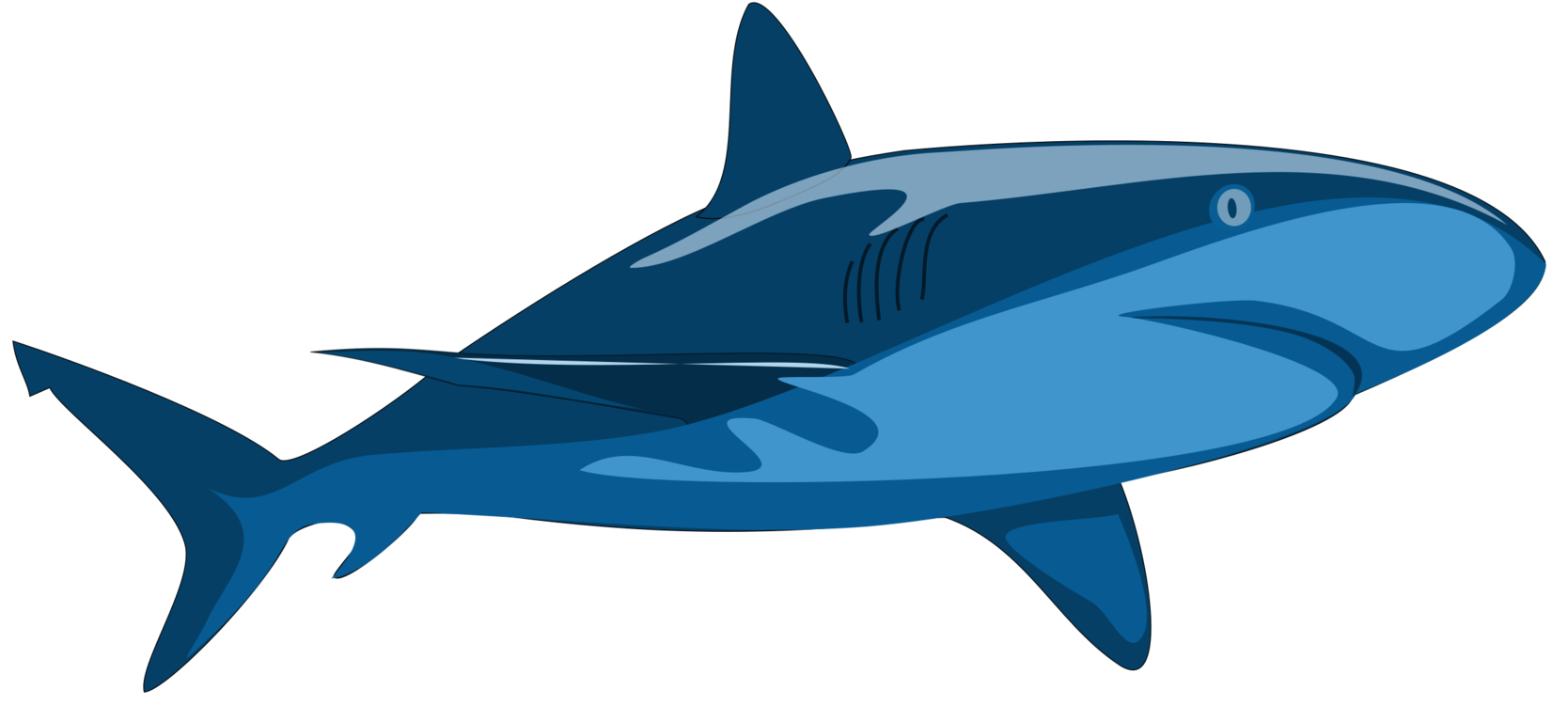 Marine Mammal,Shark,Whales Dolphins And Porpoises