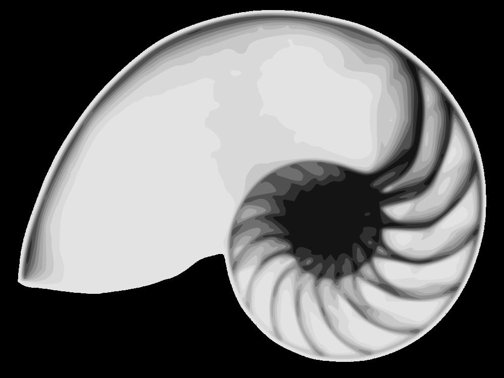 Nautilida,Marine Invertebrates,Close Up