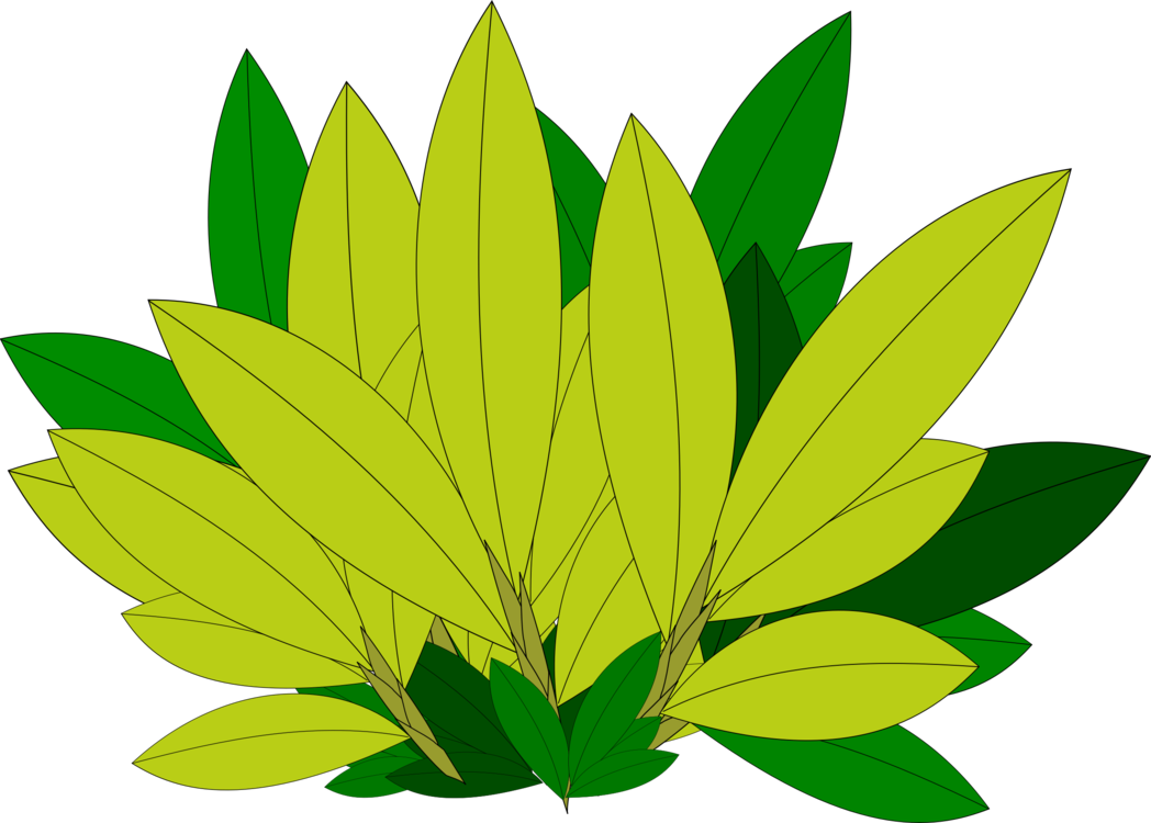 Maple leaf Tree Branch Plant