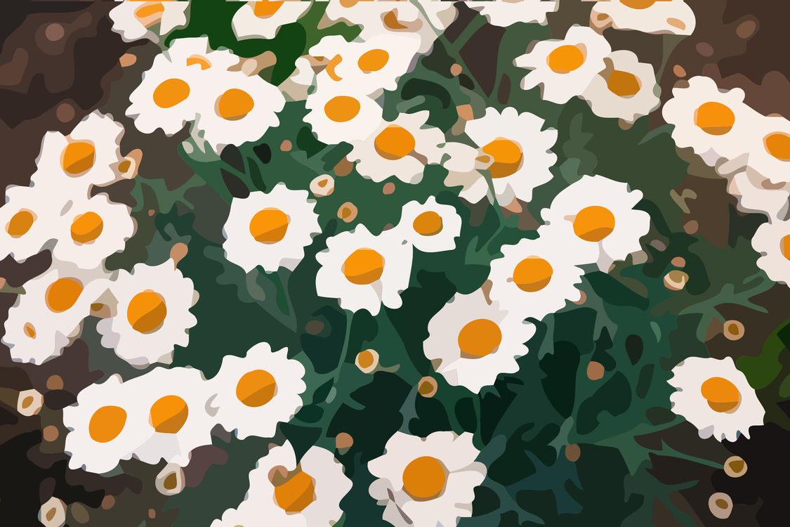 Common daisy oxeye daisy flower computer icons petal free commercial common daisy oxeye daisy flower computer icons petal izmirmasajfo