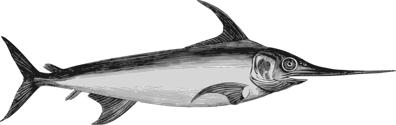 Billfish,Shark,Marine Biology