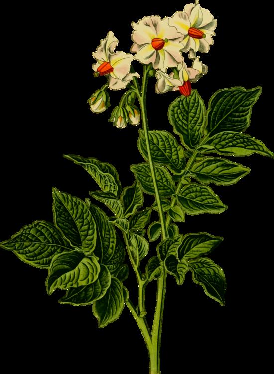Plant,Flower,Rose Family