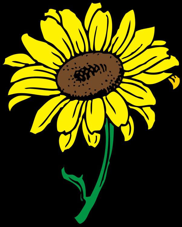 Sunflower Seed,Chrysanths,Plant