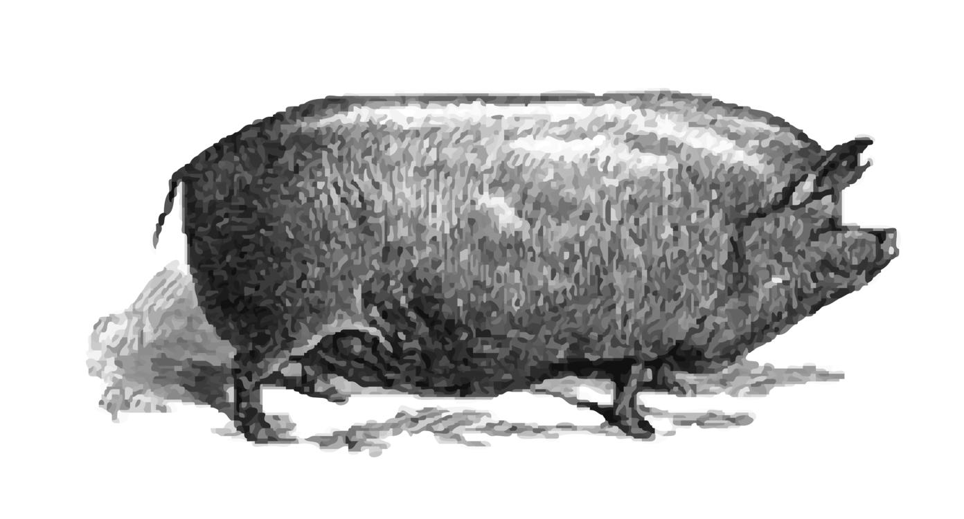 Wildlife,Terrestrial Animal,Pig