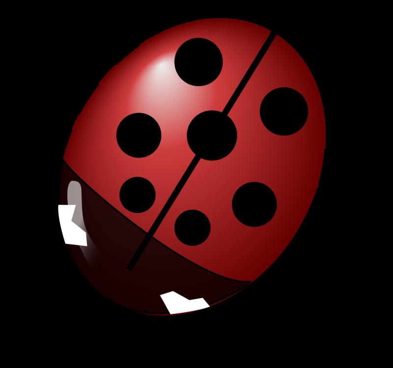 Ladybird,Kettle,Invertebrate