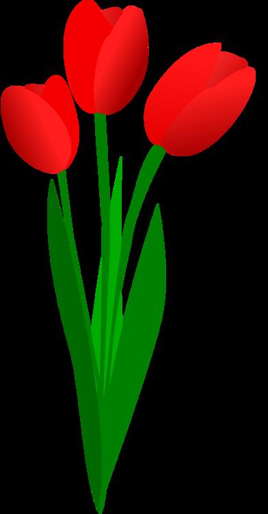 Heart,Plant,Flower