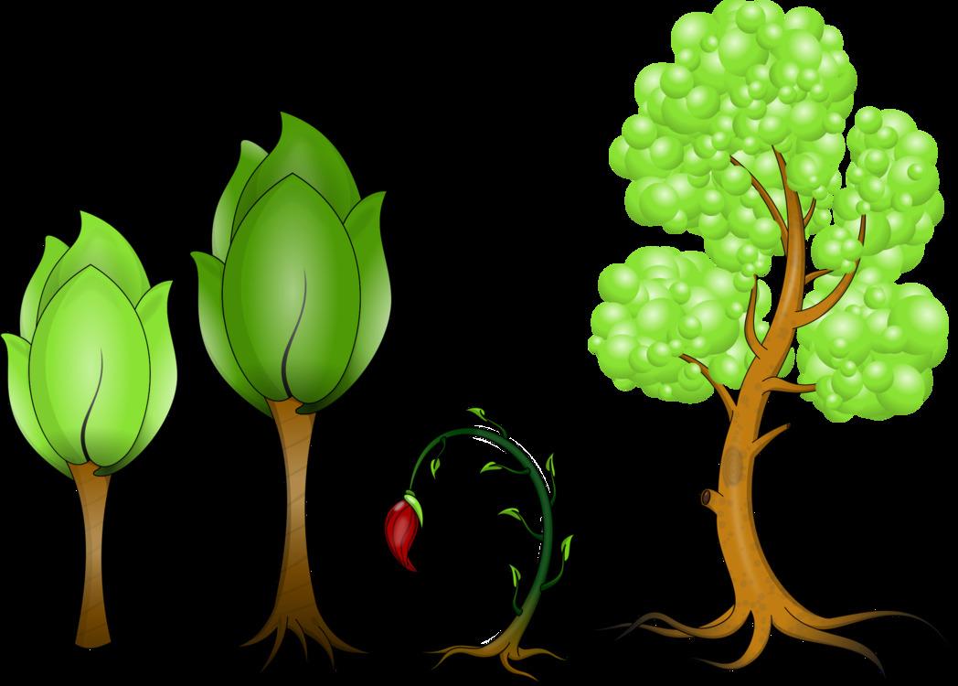 Computer Wallpaper,Plant,Leaf