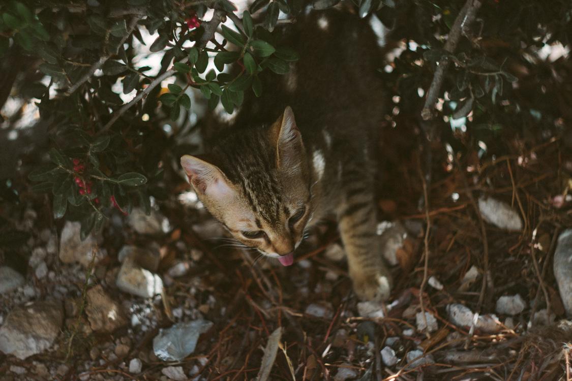 Wildlife,Wild Cat,Small To Medium Sized Cats
