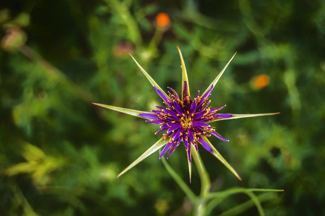 Flora,Wildflower,Plant