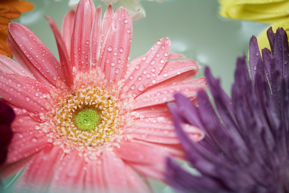 Pink,Pollen,Close Up