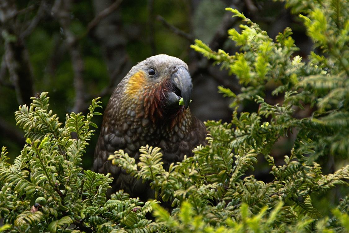 Parrot,Tree,Beak