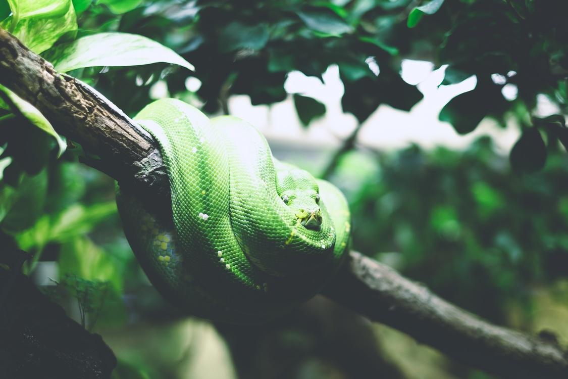 Wildlife,Chameleon,Reptile
