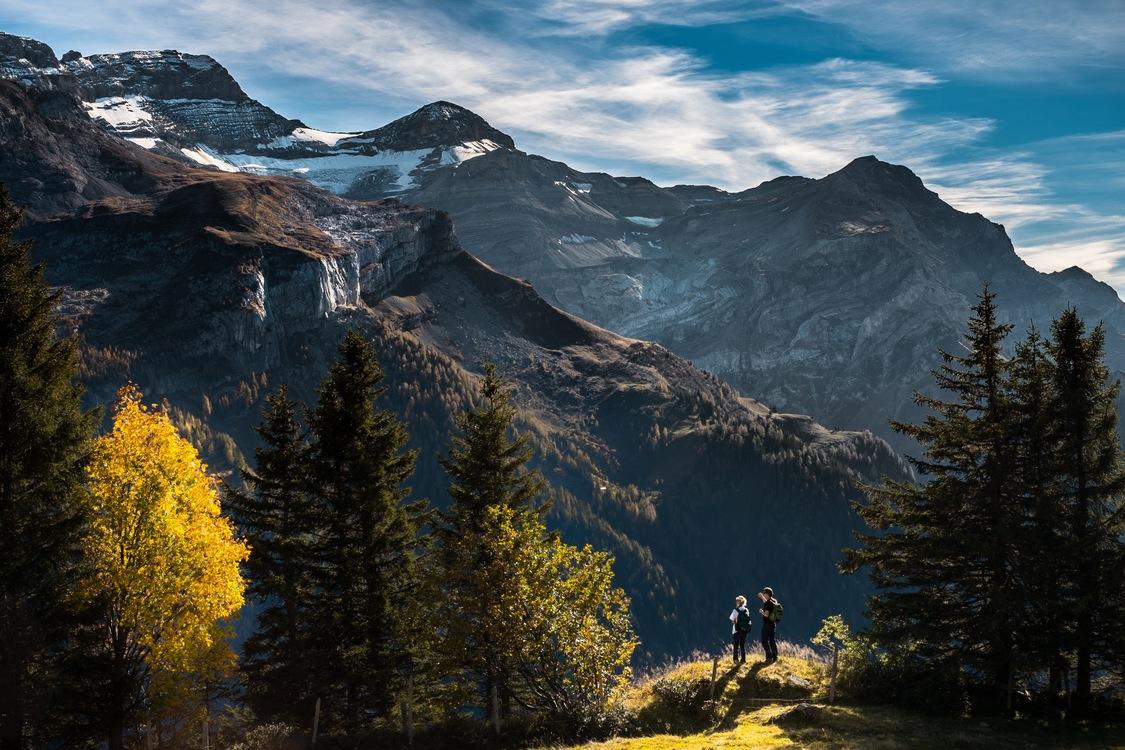 Wilderness,Forest,Massif