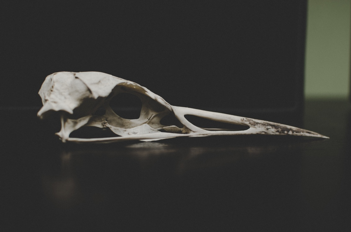 Jaw,Still Life Photography,Organism