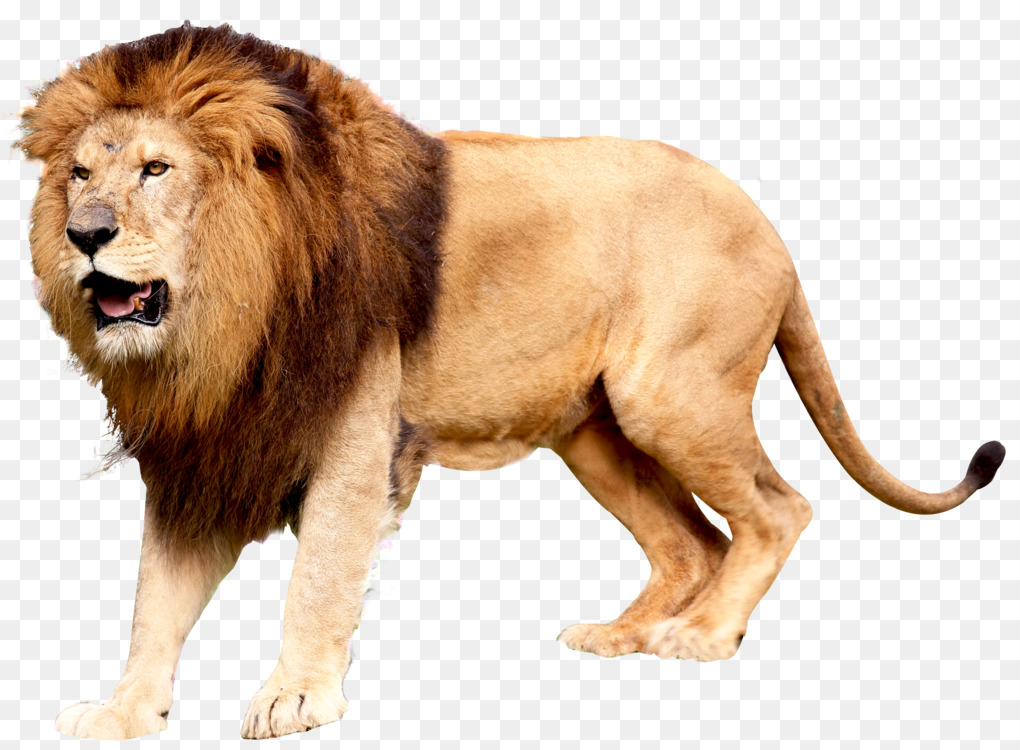 Lion Felidae Computer Icons Roar 3D computer graphics