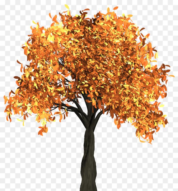 Autumn,Plant,Houseplant