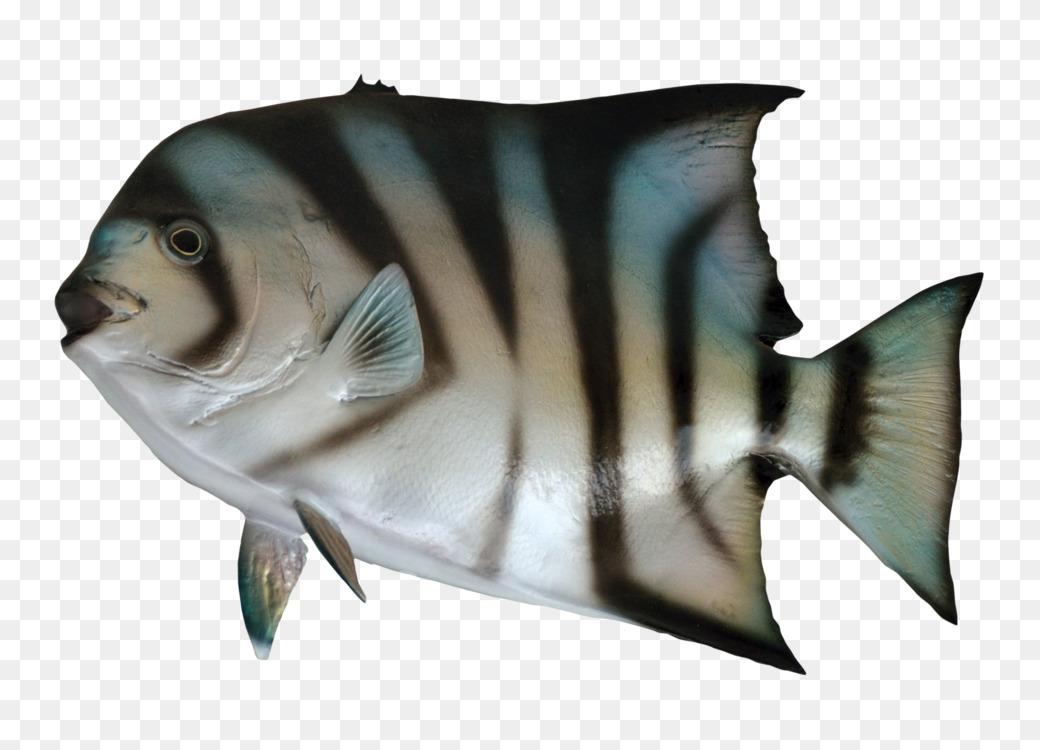 Aquarium Tropical Fish Image Resolution Free Png Image Aquarium