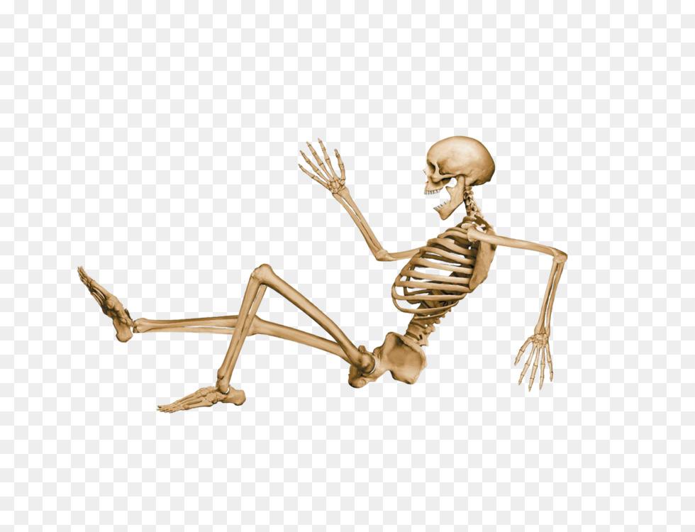 Human Skeleton Skull Bone Human Body Free Png Image Human Skeleton
