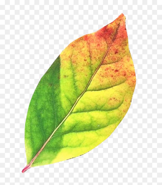 Plant,Leaf,Plant Pathology