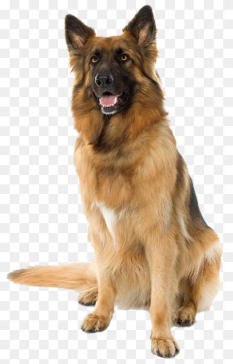 Puppy Beagle Cat Pet Dog training