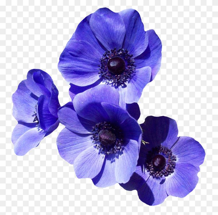 Flower Bouquet Purple Blue Rose Cc0 Blue Plant Flower Cc0 Free