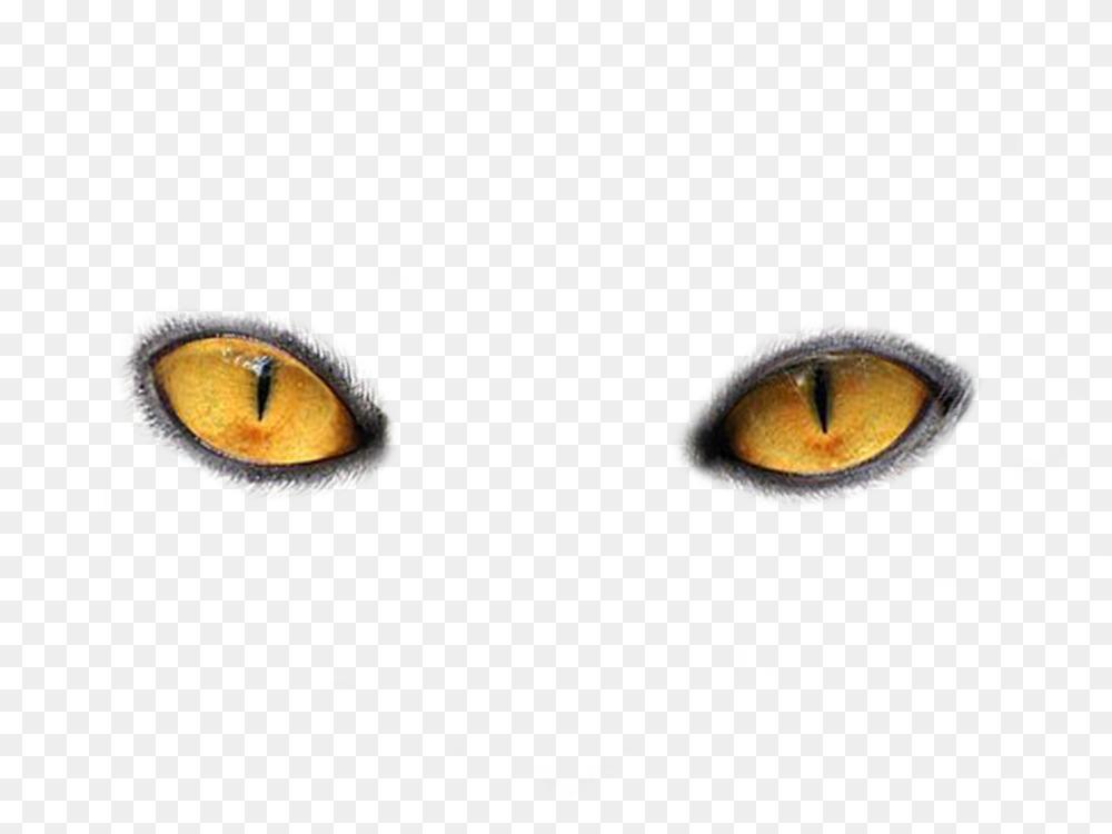 Cat's eye Tiger Kitten