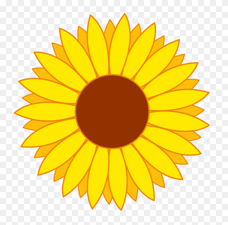 common sunflower sunflower seed download drawing free png free dog clip art images free dog clip art frame