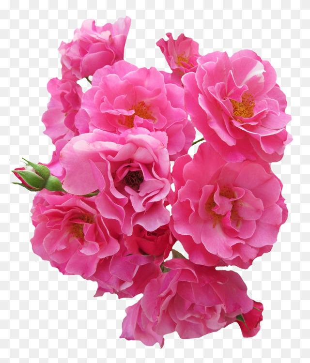 Pink flowers flower bouquet garden roses cabbage rose free png image pink flowers flower bouquet garden roses cabbage rose mightylinksfo