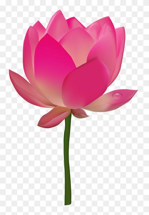 Lotus cars nelumbo nucifera egyptian lotus pdf flower free png image lotus cars nelumbo nucifera egyptian lotus pdf flower mightylinksfo