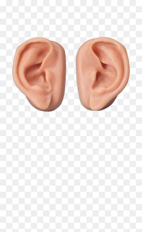 Paranasal sinuses Ear Anatomy Nose Free PNG Image - Ear,Sinus ...