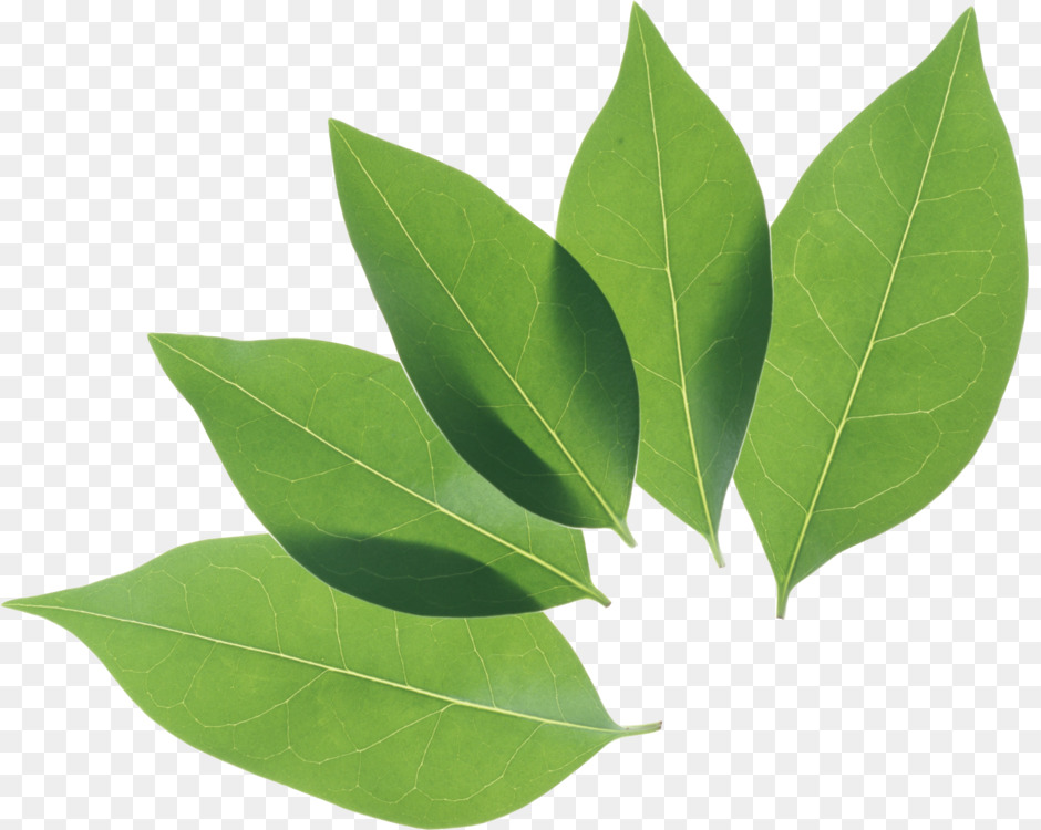 Plant Stem,Plant,Leaf